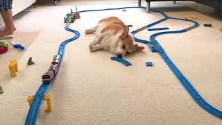 背中すれすれで電車が通過するも、微動だにしない我が家のイノシシ…いや...