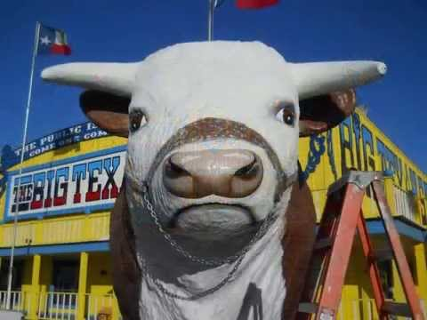 Fixin The Big Texans Cow 2013