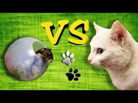 Cat VS Hamster in a Ball