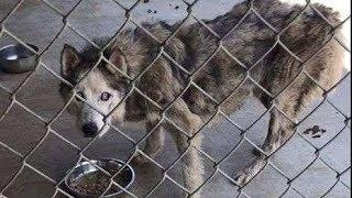 ある日、シャリさんは、一枚の犬の写真を見て涙があふれてきました。 犬...
