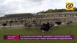 В Могилёвской области закрывают крупнейшую в Беларуси страусиную ферму