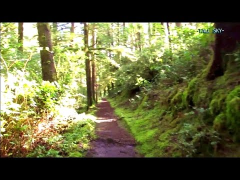 VIRTUAL HIKE #11D: Forest to Beach (Longer Route) - Actual Sounds Brisk Pace 30 Minutes