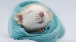 Harvard Scientists REVERSE Aging In Mice. People Next...