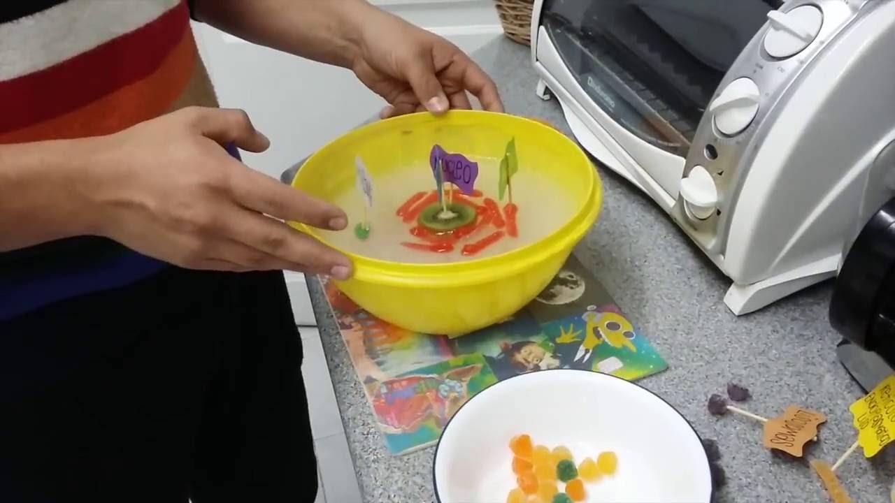 Celula Hacer Vegetal La Como
