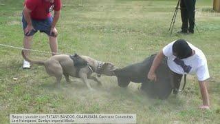 В правительстве России утвердили список потенциально опасных пород собак.