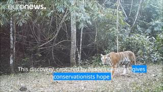 Tigers discovered in Thailand