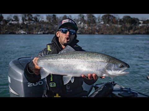Steelhead + Browns On The Niagara River [BEST Hook-ups]