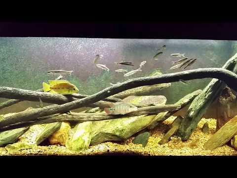 """""""Around the World"""" Update on My Fish Room (7/15/17)"""
