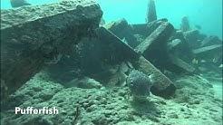 Warren's Adventure Snorkeling JAX