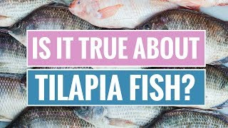 Tilapia Fish: Benefits and Dangers