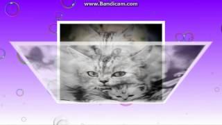 Песня про кота+Смешные кошки :)