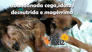 Esperança, cadela cega, idosa, desnutrida e magérrima, abandonada com crueldade