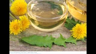 Where to Buy Dandelion Tea