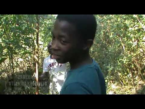 Download Ithunzi likampangazitha