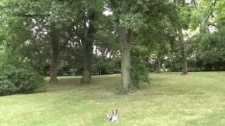 Guy Nashville Dog Trainer 065: Training A Feist Obedience