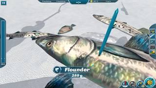 Ice Lakes - 20kg Barracuda! (Barracuda Free Fishing)