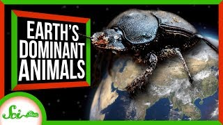 What Animal Dominates Earth?