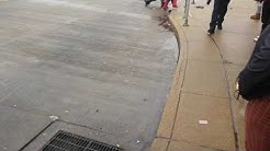 Fight at Hanley metro link st Louis mo