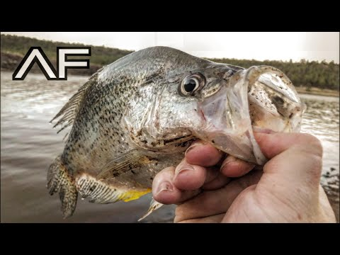 NORTHERN ARIZONA CRAPPIE AND TROUT FISHING!!!