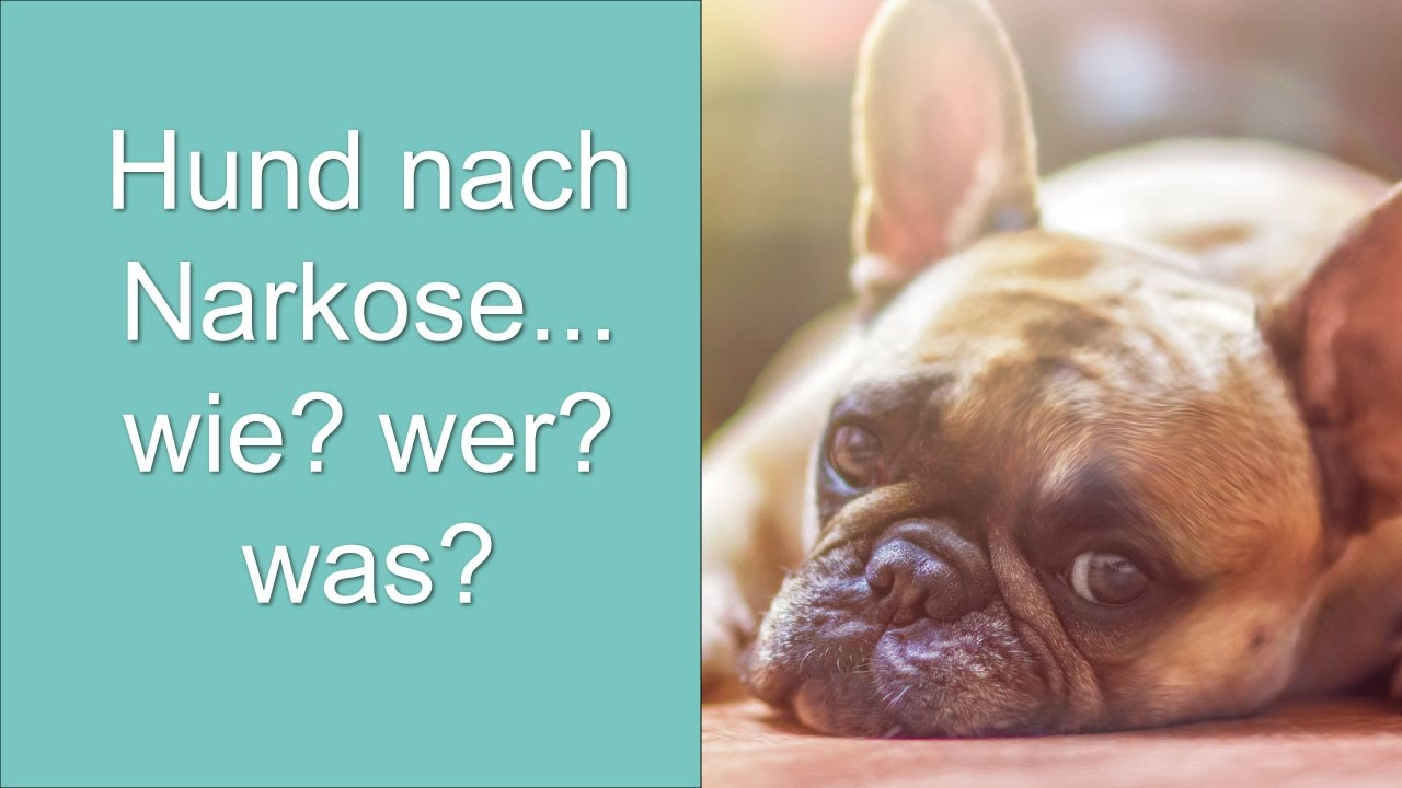Hund Nach Narkose Gestorben