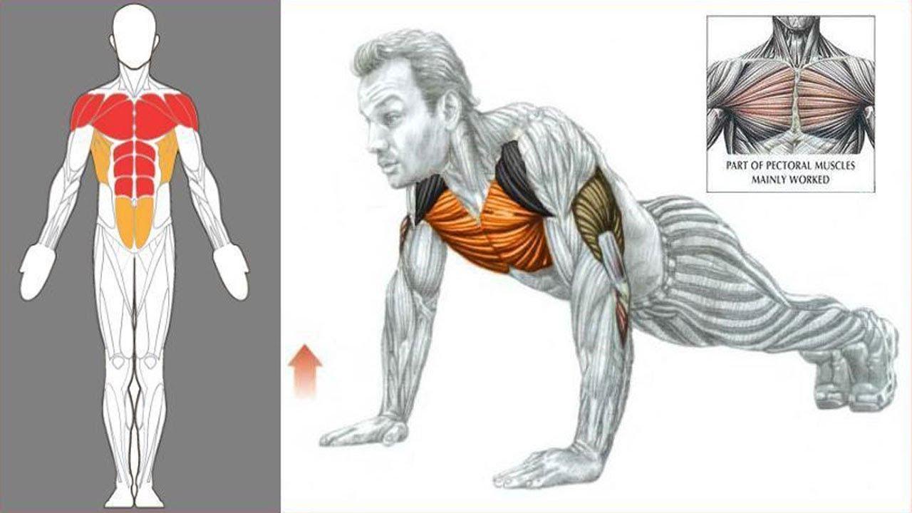 мост отжимание от пола какие мышцы качаются фото приготовления этих