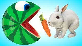 Watermelon Pacman meets a Bunny in wooden house when he travel around on farm