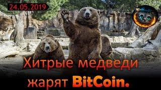 Хитрые медведи жарят BitCoin.
