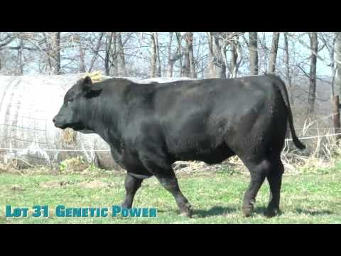 Lot 31  Genetic Power