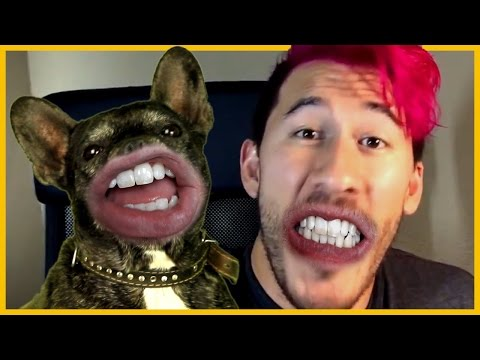 Talking Dogs Inspired By Markiplier MEOW