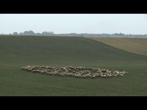 Hungarian land grabbing leaves farmers angry