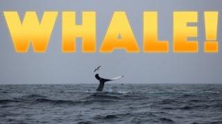 WHALE!    #42   DrakeParagon Sailing Season 3