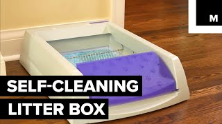 Never Scoop Your Kitty's Poop Again With This Self-Cleaning Litter Box