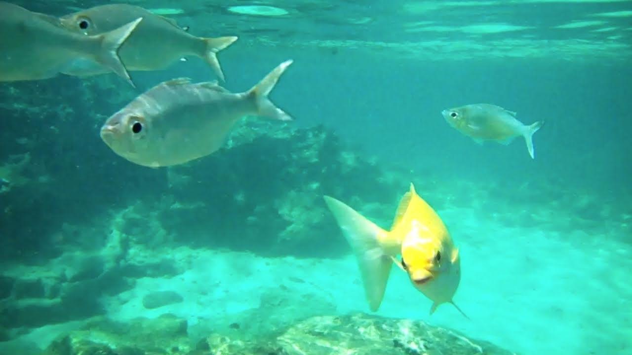 Snorkeling At Shark S Cove Hawaii Youtube