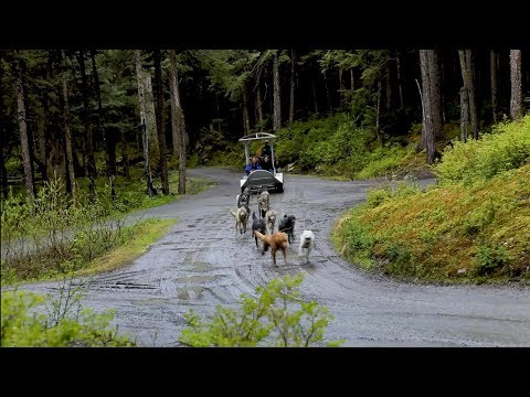 Shore Excursion - Sled Dog Discovery & Musher's Camp