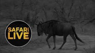 safariLIVE  - Sunrise Safari - July 15, 2018