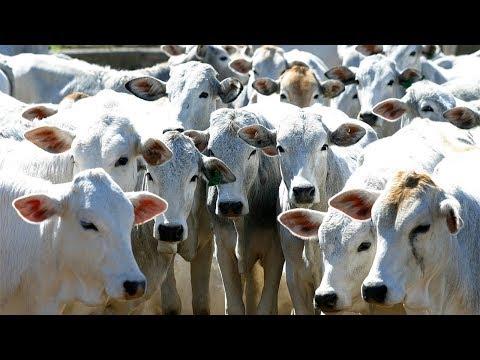 Clique e veja o vídeo Gestão na Pecuária / Índices Zootécnicos - Curso Como Aumentar a Rentabilidade na Pecuária de Corte