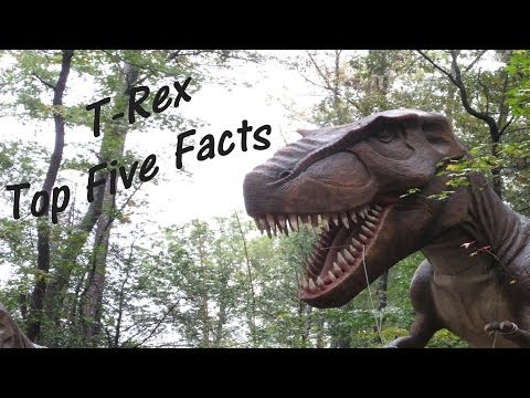 T-REX - Tyrannosaurus rex - Top Five Facts!  🐸