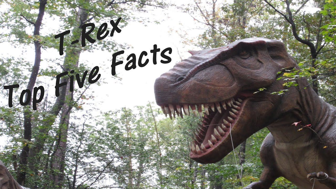 T. Rex Mitglieder
