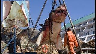 15 Ton Prehistoric Shark Captured in Pakistan