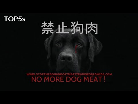 The Barbaric Yulin Dog Eating Festival | What it is & How You Can Help Stop it by 2018...