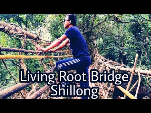 Living Root Bridge, Cherapunjee