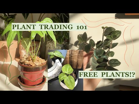 PLANT TRADING 101   how to score your dream plants for FREE!!