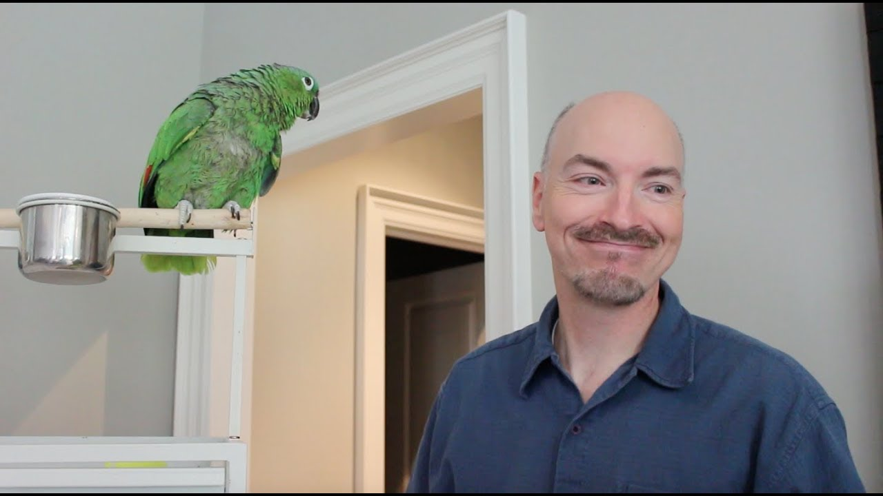 How To Care For Your Pet Parrot Featuring Benji Youtube