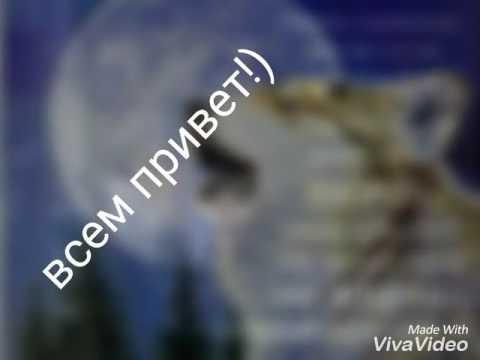 Красивые картинки с волками )))