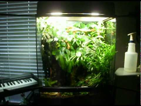 crested gecko terrarium entry for exo terra 2011 contest youtube. Black Bedroom Furniture Sets. Home Design Ideas