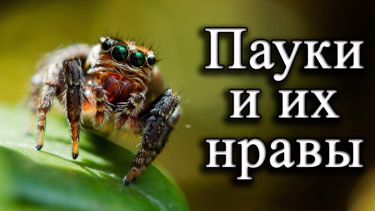 с пауками знакомство