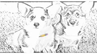 Auto Draw 2: Corgi Puppies