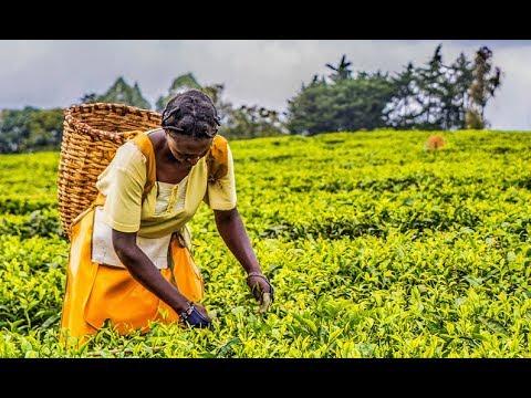 Catalyzing Innovation: Towards better land governance in the digital economy   World Bank Live