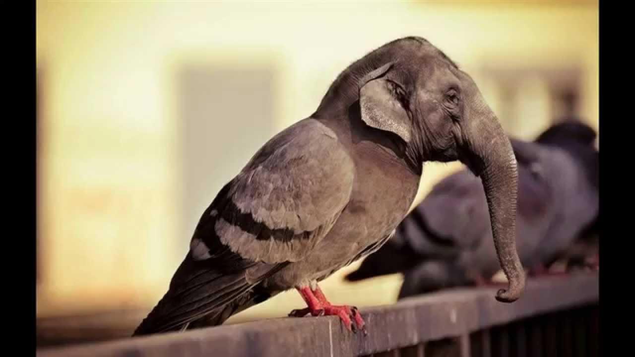 10 photos drôles et insolites sur le pigeon - YouTube