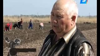 Как живется на Кубани иностранным фермерам
